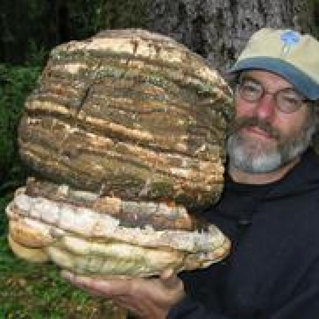 Wild Mushrooms & the Mycology of Consciousness